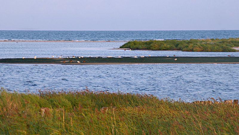 Oostzee, Zuid-Zweden   © Ecomare, foto fitis, sytske dijksen