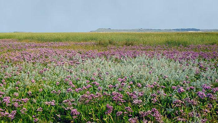De Slufter op Texel | © foto Fitis, www.fotofitis.nl