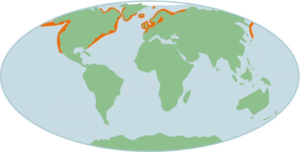 Verspreiding gewone zeehond op wereldschaal   © Ecomare, Sherri Huwer
