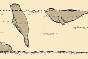 Slapende zeehonden | © Ecomare, Sytske Dijksen